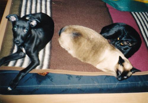 Apa, Sharie a Smokie 2003